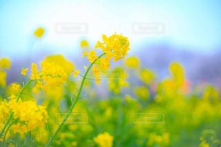 花の写真・画像素材[439006]