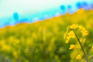 花の写真・画像素材[439007]