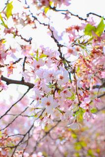 花の写真・画像素材[439011]