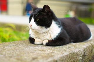 猫の写真・画像素材[439013]