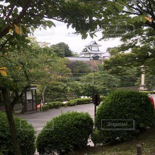 庭の茂みのグループの写真・画像素材[909315]