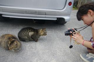 猫の写真・画像素材[385579]