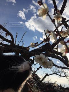 猫の写真・画像素材[385605]