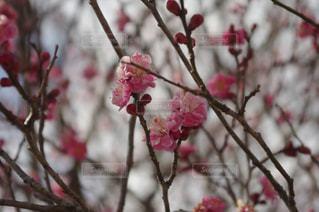 花の写真・画像素材[385742]