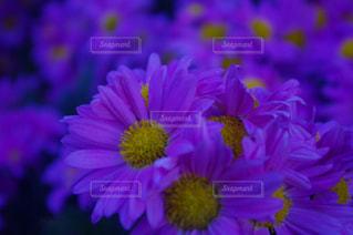 花の写真・画像素材[391246]