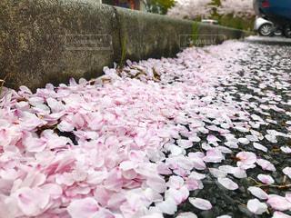 春の写真・画像素材[462817]