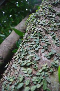 木の写真・画像素材[696553]