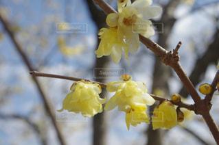花の写真・画像素材[696557]