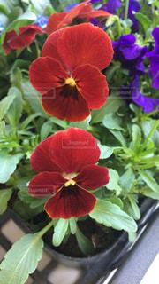 花の写真・画像素材[390991]