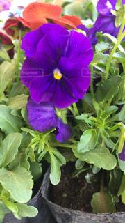 花の写真・画像素材[390995]