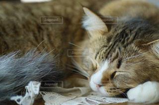 猫の写真・画像素材[387121]