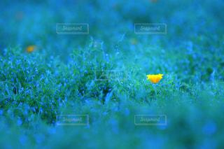 自然の写真・画像素材[387172]