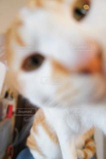 猫がぼやけてをクローズ アップの写真・画像素材[1279647]