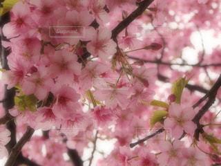 花の写真・画像素材[384503]