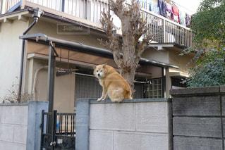 犬 - No.384526