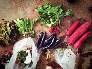 野菜の写真・画像素材[384530]