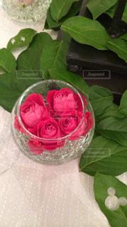 花の写真・画像素材[386240]