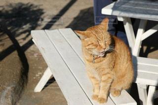 猫 - No.386519