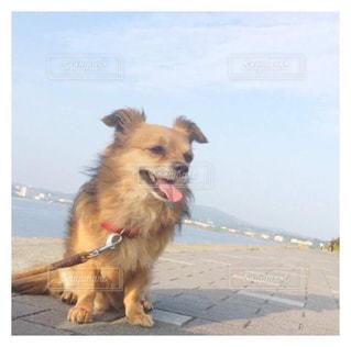 犬の写真・画像素材[387649]
