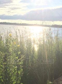 自然の写真・画像素材[387676]