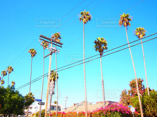 青い空とヤシの木とブーゲンビリアの写真・画像素材[418631]