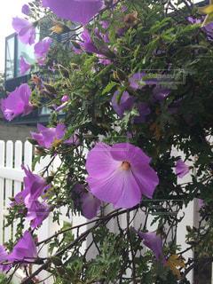 花の写真・画像素材[440544]