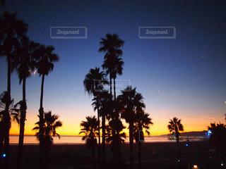 日没の前にヤシの木の写真・画像素材[920743]
