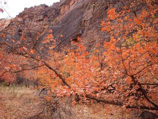 背景の山と木の写真・画像素材[921930]