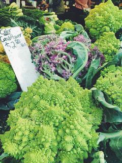 ブロッコリーのグループ カラー カリフラワー 野菜 やさい ファーマーズマーケット - No.1237973