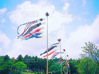 鯉のぼりの季節 こいのぼりの写真・画像素材[2090868]