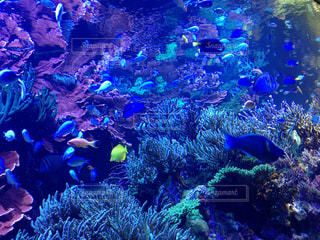 魚の写真・画像素材[392298]