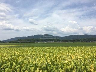 田舎の風景の写真・画像素材[1293530]