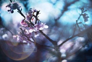 花 - No.499355