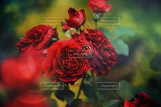 花の写真・画像素材[506394]
