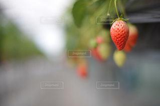 春の写真・画像素材[406125]