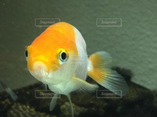 魚の写真・画像素材[563336]