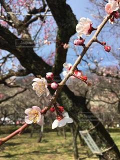 花の写真・画像素材[384087]