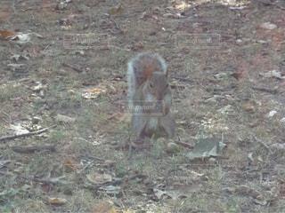 動物の写真・画像素材[385503]