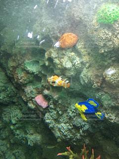 No.511416 魚