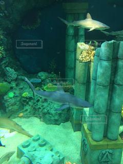 No.512876 魚
