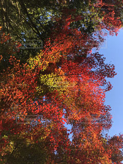 近くの木のアップの写真・画像素材[1712810]