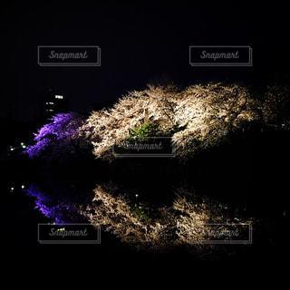 桜の写真・画像素材[438309]