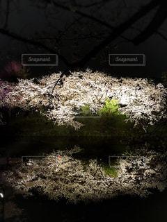 桜の写真・画像素材[438317]