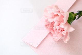 花の写真・画像素材[384473]