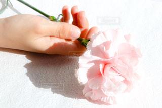 花の写真・画像素材[390401]