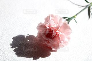 花の写真・画像素材[400934]