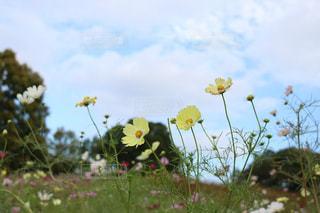 近くの花のアップの写真・画像素材[1459964]
