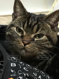 猫の写真・画像素材[393490]