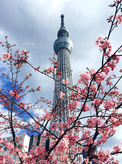 春の写真・画像素材[384744]