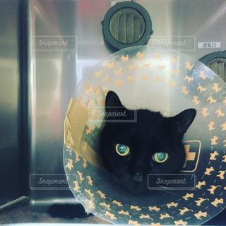 猫の写真・画像素材[384779]